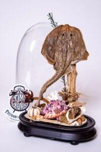 Large Thornback Stingray w/ Octopus, Fish & Sand/Sea Grass/Shells Oblong Dome